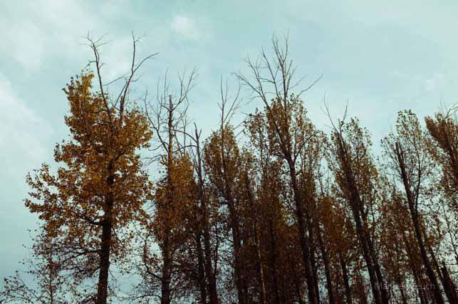 Fall 2014